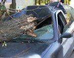 Упало дерево. Мэр уцелел
