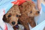 Замечательные собачки
